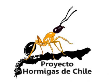 Proyecto Hormigas de Chile