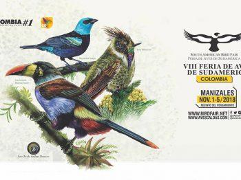 Pajareros del mundo se reúnen en Colombia