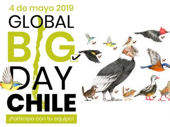 Resultados Global Big Day 2019
