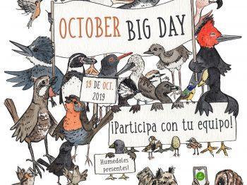 Categorías e inscripción October Big Day Chile 2019