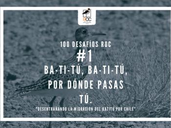 #1 Ba-ti-tú, ba-ti-tú, por dónde pasas tú: Desentrañando la migración del Batitú por Chile