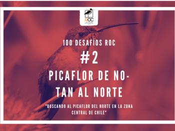 #2 Picaflor de no-tan al norte: Buscando al Picaflor del norte en la zona central de Chile.