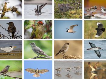 10 de octubre: Día Mundial de las Aves Migratorias