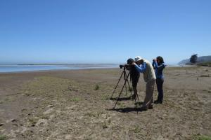 Censando en desembocadura Mataquito