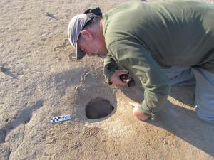 Proyecto Golondrinas del desierto / © R.Peredo