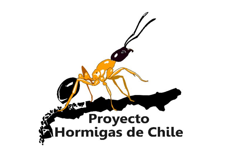 logo-hormigas