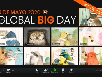 Global Big Day Chile 2020