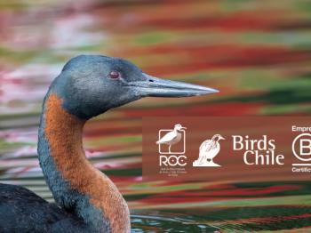 Convenio de colaboración ROC-BirdsChile