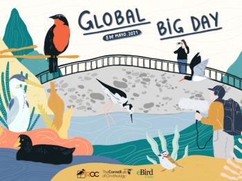 Global Big Day Chile 2021