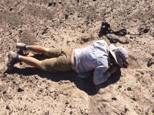 Proyecto Golondrinas del desierto